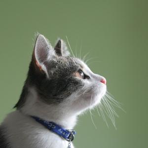 meow ipsum pur amet